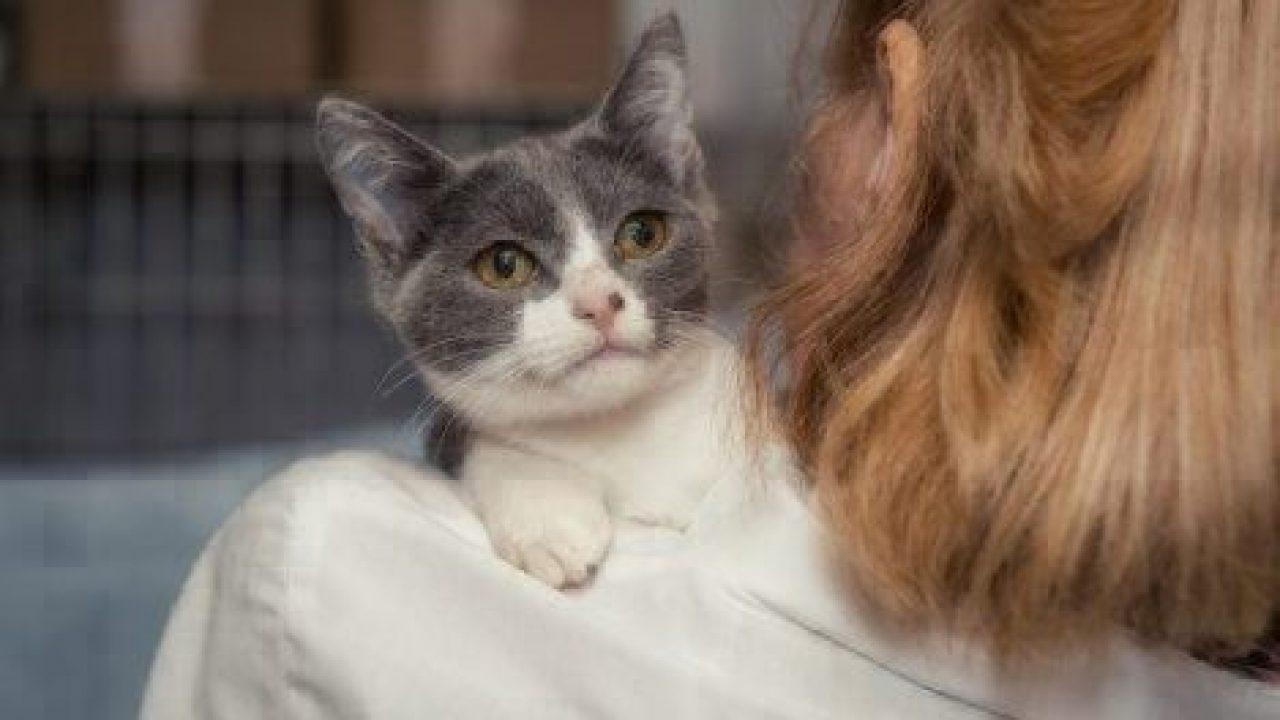 cat helping pet parent