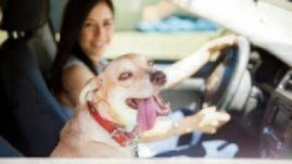 pets and traveling