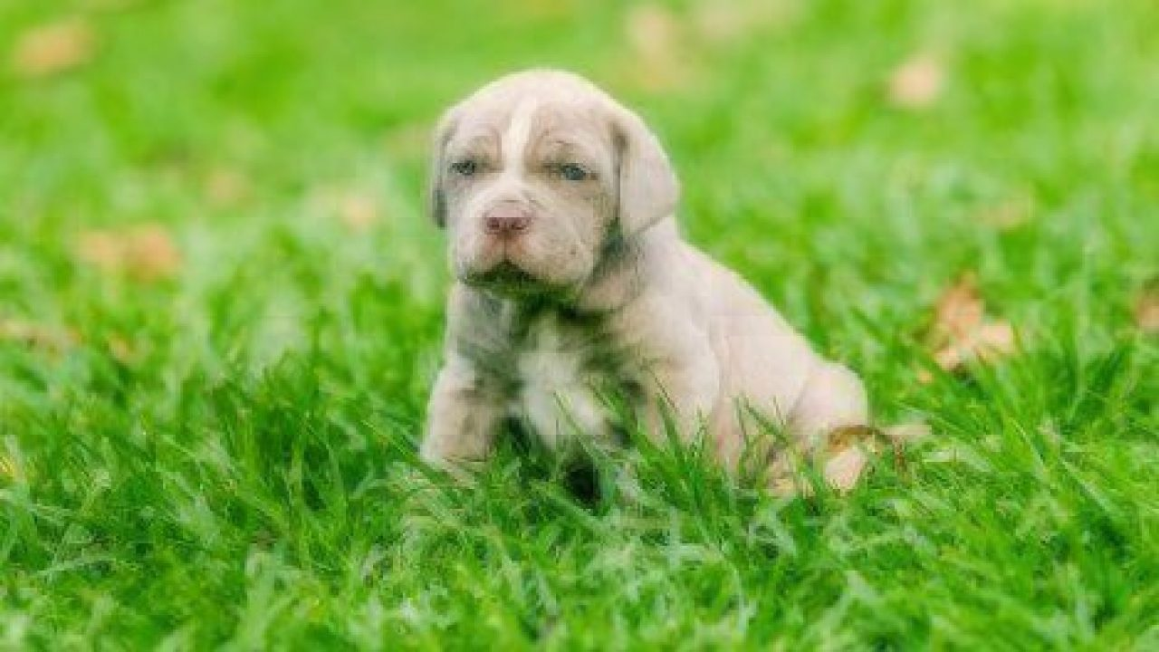 Will My Puppy Have Blue Eyes Forever? | Healthy Paws