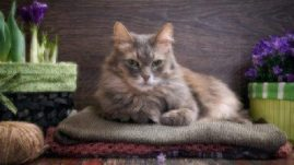 healthy paws essential oils
