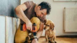 pet proof renovation