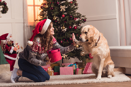 healthy paws pet parent gift guide