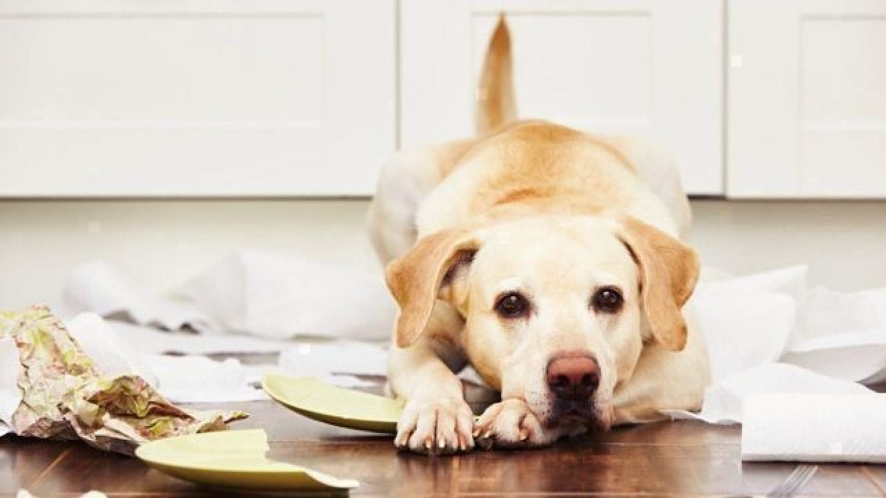 Why Your Furry Troublemaker Needs Pet Insurance