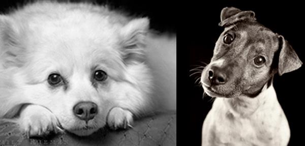 best-friend-photo-pet-photography-1