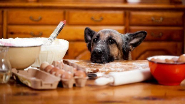 Cook for your dog homemade dog food recipes healthy paws forumfinder Image collections