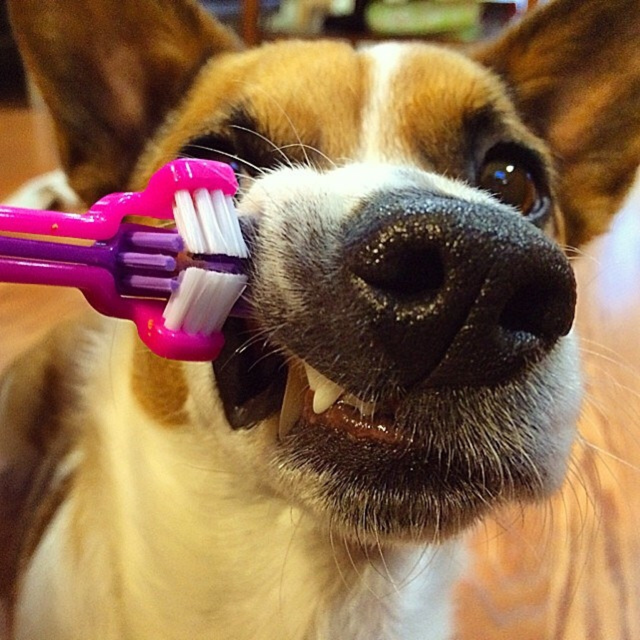 how to brush dogs teeth