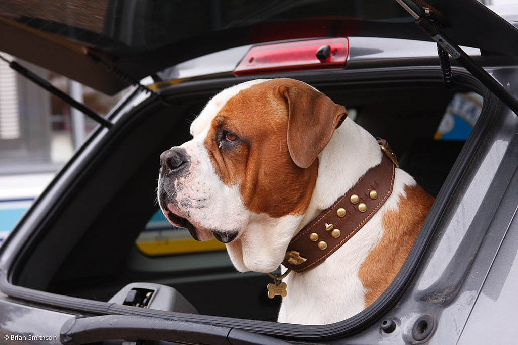 "Nationwide Insurance Claims >> Managing Motion Sickness – Helping our Pets Get their ""Car Legs"" 