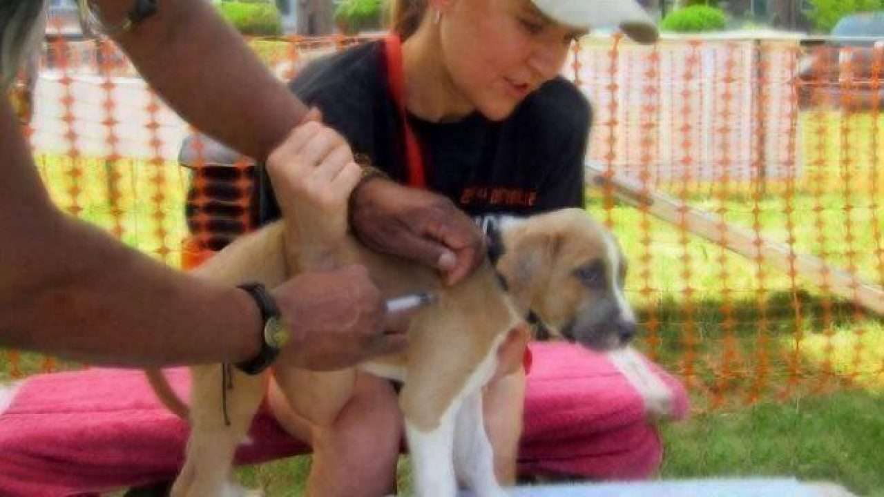 Decoding the Dog Anti-Vaccination Movement | Healthy Paws ...